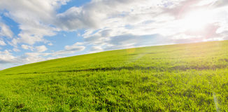 A summer day with green grass Stock Photography