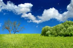 Summer day landscape Royalty Free Stock Images