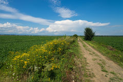 Summer day landscape with field, cloudy sky and road. Summer day landscape with forest, field, cloudy sky and road. Carpathian mountains Stock Images