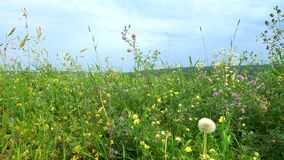 Summer day on the meadow stock video footage