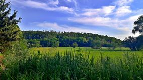 Summer day on meadows. Besides woods under sky with clouds royalty free stock photography