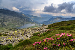 A summer day in the mountains. With flowers , lake and rainbow in the sky royalty free stock photography