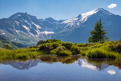 Summer-day in the mountains Royalty Free Stock Photo