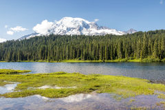 Summer day at Mt.Rainier national park Royalty Free Stock Photography