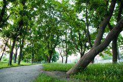 Summer day thick bright green grass grows in the park. On both sides grow large green trees. royalty free stock photos