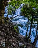 At the forefront are many tree roots. Summer day in the park, waterfall through the trees; At the forefront are many tree roots royalty free stock image