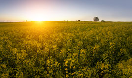 Summer day - field Stock Photography