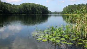 Summer day at remote forest lake stock video footage