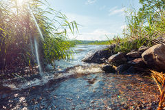 Summer day on the river bank in thickets of grass. Pure water Royalty Free Stock Image