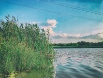 Free Summer, Day, River. The Cane, Reed, A Duckweed And The Wood Grow Along The Coast Of The River Royalty Free Stock Images - 165837529