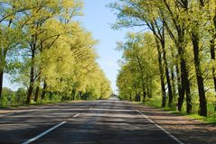 Summer day and road with trees at side Royalty Free Stock Photography