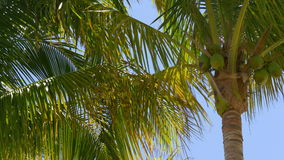Summer day sunny palm tops blue sky background 4k florida usa stock video footage