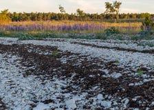 Free Summer Day With Traditional Saaremaa Coast, Short Green Grass, Dune Sand, Juniper, Rocks And Pebbles, Undva Cape, Tagamoisa Stock Image - 189080061