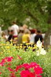 Summer days 2. Corporate summer days, flower bed in focus in the foreground, a group of happy people sitting and chatting at the table in the background. � stock photos