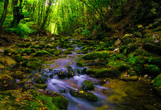 Summer depth. Calm summer river in deep wood Royalty Free Stock Images