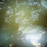 Summer design, forest, nature green wood sunlight Royalty Free Stock Photography