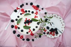 Cheesecake with berries and mint Stock Images