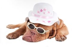Summer dog Stock Photography