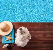Summer dog Stock Images