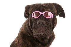 Summer dog Stock Photos