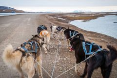 Summer dog sledding, first person perspective. Dog sledding in summer in Svalbard, Arctic, first person perspective stock images