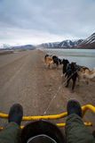 Summer dog sledding, first person perspective. Dog sledding in summer in Svalbard, Arctic, first person perspective stock photography