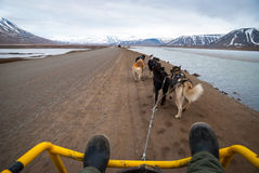 Summer dog sledding, first person perspective royalty free stock photo