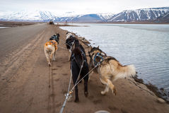 Summer dog sledding, first person perspective. Dog sledding in summer in Svalbard, Arctic, first person perspective royalty free stock image