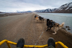 Summer dog sledding, first person perspective. Dog sledding in summer in Svalbard, Arctic, first person perspective royalty free stock photos