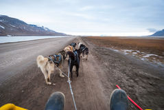 Summer dog sledding, first person perspective. Dog sledding in summer in Svalbard, Arctic, first person perspective royalty free stock images