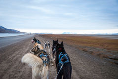 Summer dog sledding, first person perspective. Dog sledding in summer in Svalbard, Arctic, first person perspective stock image
