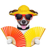 Summer dog Stock Image