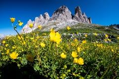 Summer Dolomites, Italy Stock Image