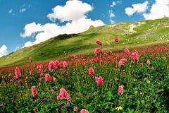 Summer in Dombai. Landscape nature.Summer in Dombai.Karachai.Caucasus.Russia Stock Photography
