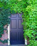 Summer Door. Door covered by leaves in early summer Royalty Free Stock Images