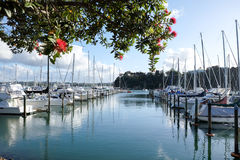Summer at Doves Bay Marina Kerikeri, New Zealand, NZ, with pohutukawa tree and flowers stock photos