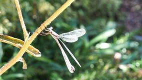 Summer dragonfly closeup Royalty Free Stock Photos