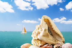 Summer dreamin'. Large conch shell with blurred seascape and sailboat in the background Stock Images