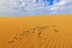 Summer dry landscape in Africa. Sand waves in the wild nature. Dunas Maspalomas, Gran Canaria, Spain. Yellow sand on the island. S Royalty Free Stock Photos