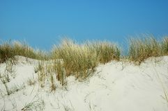 Summer dunes Stock Image