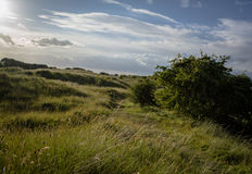 Summer Dunes. Grass covered sand dunes on the coast at Saltfleetby,Lincolnshire Stock Image