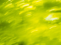 Summer dynamic bokeh background. Blurred lights backdrop bright green. Summer dynamic bokeh. Abstract spring background Stock Photos
