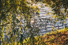 Summer or early autumn park with pond river and weeping willow trees on the shore Stock Photos