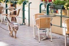 Summer empty open air restaraunt in Europe. Summer empty open air cafe in european city royalty free stock photos