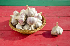 Summer end garlic harvest on table. Summer end garlic harvest on red table Stock Photos