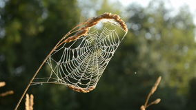 Summer end spider-web in morning light