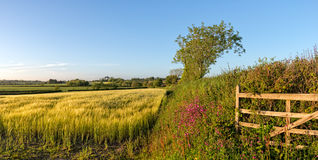 Summer in the English Countryside Stock Images