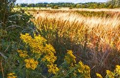 Summer English field Stock Photo