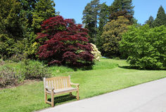 Summer in an English Park with Bench seat Royalty Free Stock Image