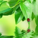 Summer environment Royalty Free Stock Image